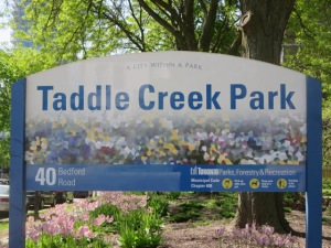 TADDLECREEK2